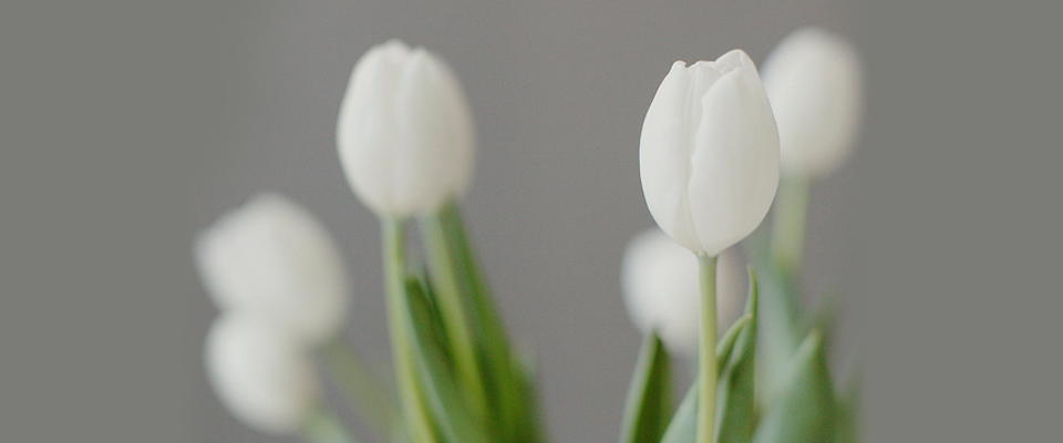 White tulips in a jar compared to Canadian seniors who face financial problems due to inadequate retirement planning.